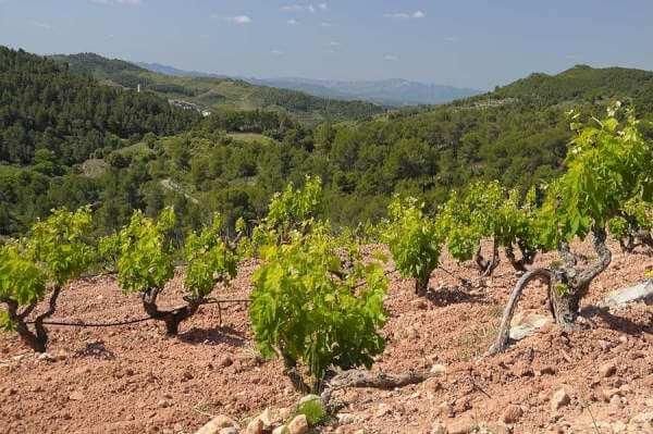 Priorat wine region