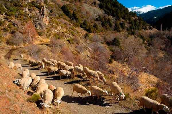 Cerdanya | Walking in the Pyrenees