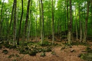 La Fageda d'en Jordà   Walking holidays in Spain