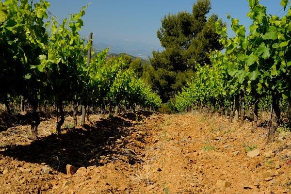 priorat walking tours and wines
