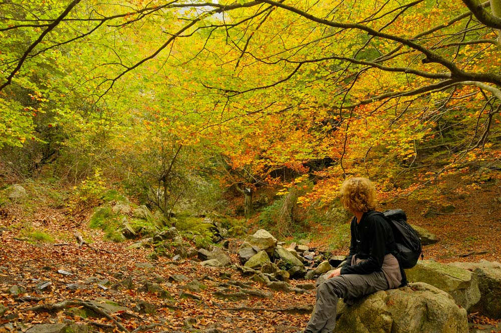 Beech wood in autumn. Monseny natural park