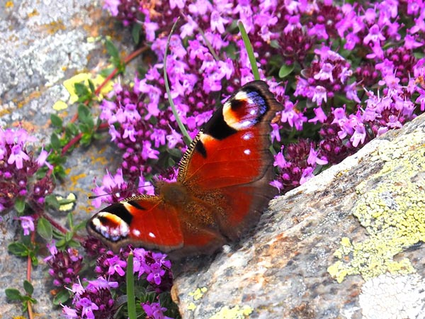 Montseny natural park | singular butterfly