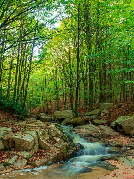 Montseny natural park | beech wood