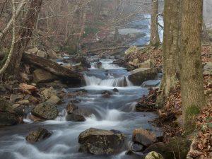 Beech woods | Montseny natural park tour