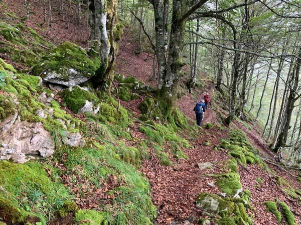 Woods in Ariège